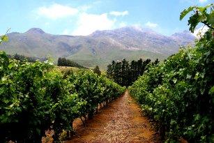 Route Des Vins Le Cap Afrique Du Sud Photos